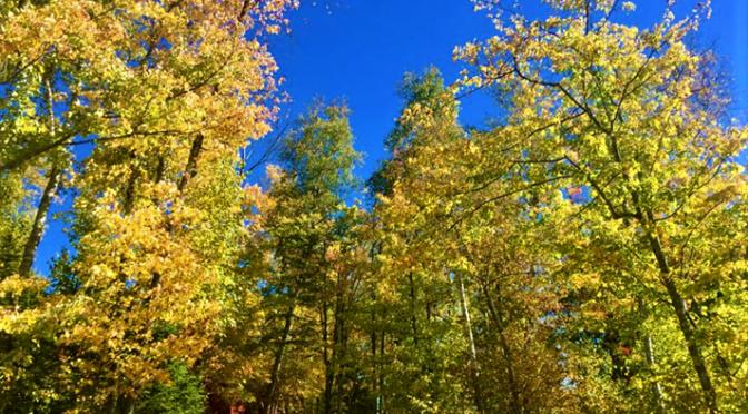 fall at camp vermilion (2)